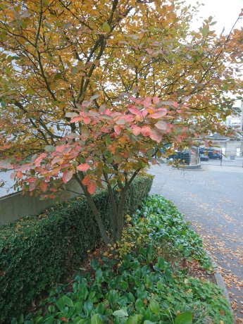 peache, orange and green leave on tree near college entrance