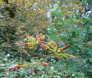 young horse chestnut brown and green leaves