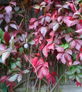 closeup of red leaves against wall