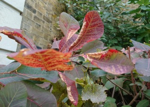 closeup of veins on red and yellow leaves